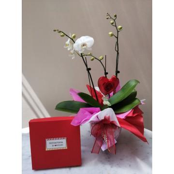 Planta orquídea y Brownies